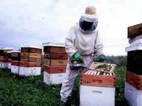 Productor entre colmenas - Foto El Colono del Oeste